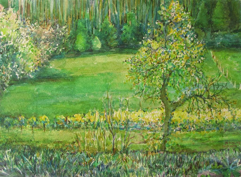 016-2012- Narcisos amarillos